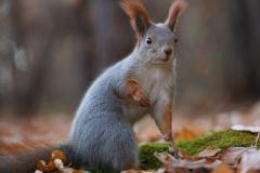 vjeverica-3